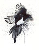 magpie_by_lukefielding-d6y36rh